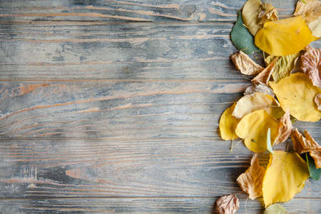 fallen yellow leaf decor on wooden background. autumnal dry foliage on timber surface with copy space. Stock Photo