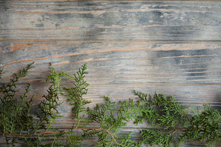 cedar pine or juniper brunches on distressed rough grey wooden background. flora nature and botany. free space concept. Stock Photo