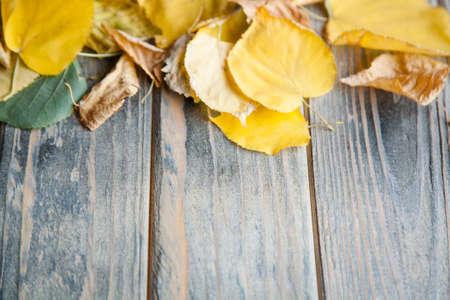 yellow autumn leaves on distressed rustic wooden background. seasonal decor on natural timber surface with free space.
