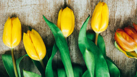Spring flowers. Natural floral decoration. Yellow tulips on beige textured background.