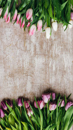 Spring background. Floral arrangement. Pink purple tulips on beige wooden textured surface.