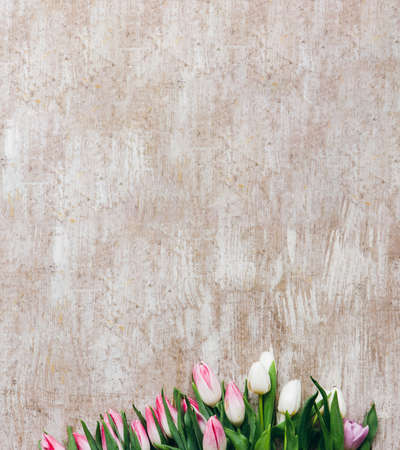 Spring background. Natural floral decor. Pink white tulips on beige wooden textured surface.