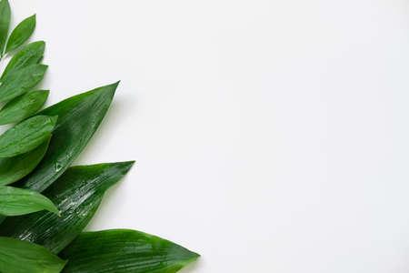 Leaves decor background. Summer foliage arrangement. Green wet plants isolated on white copy space. Foto de archivo