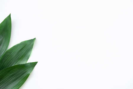 Leaves minimal background. Nature decor. Fresh green foliage isolated on white copy space. Standard-Bild