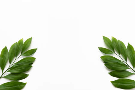 Leaves frame. Nature decor. Two green exotic twigs isolated on white copy space abstract background.
