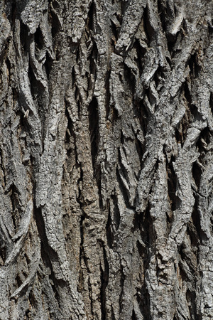 bark of an old tree close up on a sunny day. texture Stok Fotoğraf