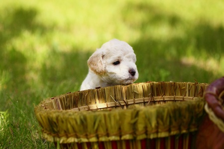 Close Up playful puppies outdoors photo