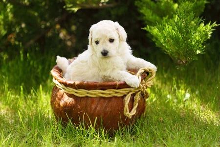 Close Up playful puppies outdoors photo