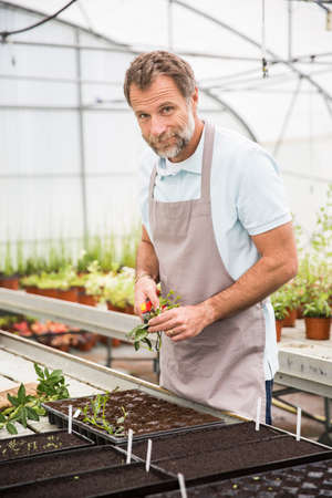 Attractive senior man working in a green house