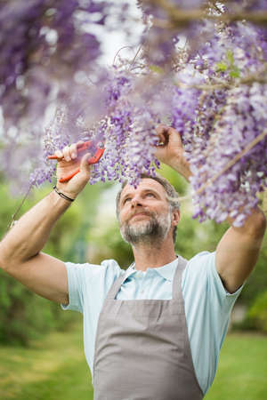 Attractive senior man working in a garden Stock Photo