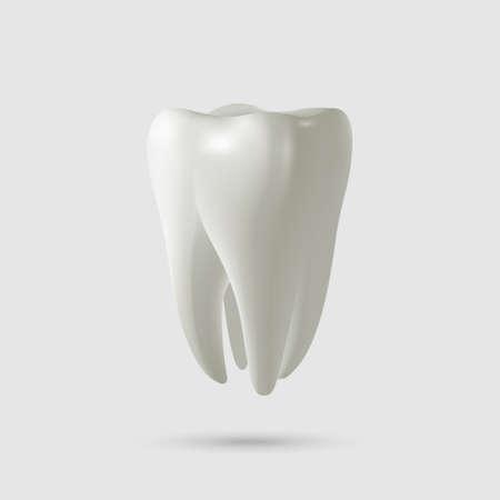Realistische tand op wit wordt geïsoleerd. Vector illustratie.