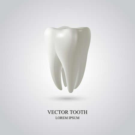 diente caricatura: Diente aislado en fondo blanco. 3D render. Dental, la medicina, el concepto de salud. Vectores