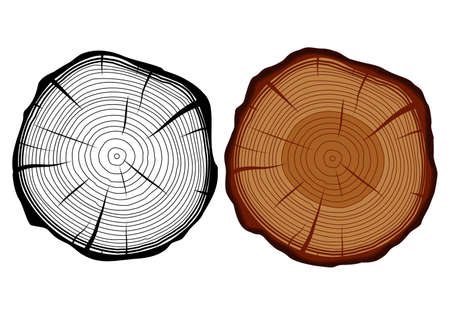 wood cross section: Set of two vector isolated tree trunks in a cut - monochrome and color.
