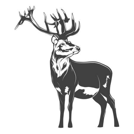 Monochrome deer on a white background. Vector   illustration.