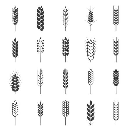 Set of simple wheat ears icons and design elements. Vector EPS8 illustration.