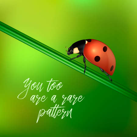 Yoy too are a rare pattern - vector background with quote and realistic ladybug insect on a blurred green. EPS10.