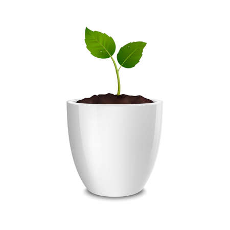 Vector growth concept. Design template of realistic icon of the sprout in a white flower pot, isolated on white background. EPS10.