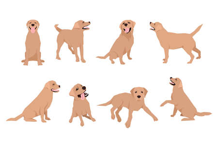 Animal dog Labrador character icon set in flat style. Design template.