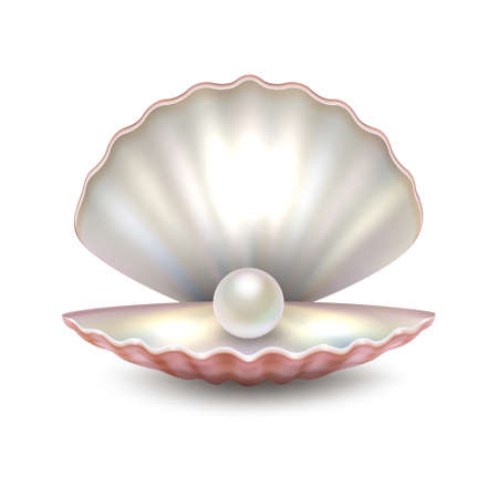 Realistic vector beautiful natural open sea pearl shell closeup isolated on white background. Design template, clipart, icon or mockup in EPS10.