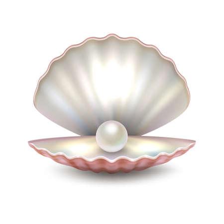 Realistyczny wektorowy piękny naturalny otwarte morze perły skorupy zbliżenie odizolowywający na białym tle. Zaprojektuj szablon, clipart, ikona lub makieta w eps10. Ilustracje wektorowe