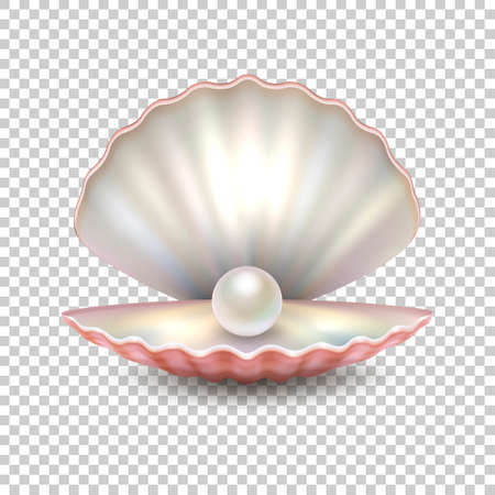 Realistic vector beautiful natural open sea pearl shell closeup isolated on transparent background. Vettoriali