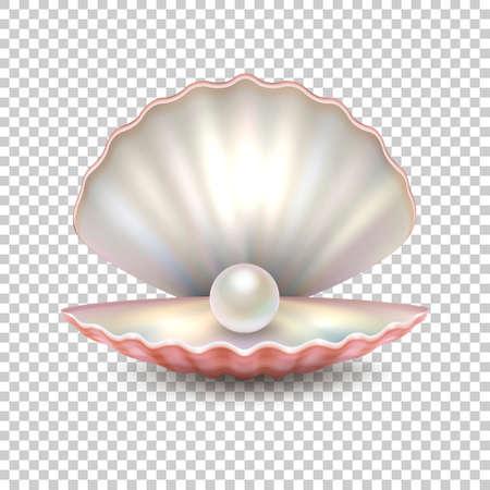Realistische Vektor schöne natürliche offene Meer Perle Shell Nahaufnahme isoliert auf transparenten Hintergrund.