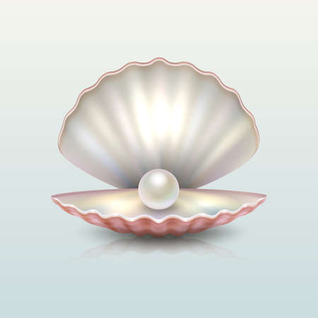Realistic vector beautiful natural open sea pearl shell closeup with reflection. Design template, clipart, icon or mockup. EPS10 illustration. Çizim
