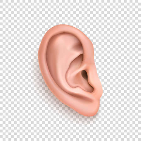Vector realistic human ear icon closeup isolated on transparency grid background. Design template of body part, human organ Ilustração