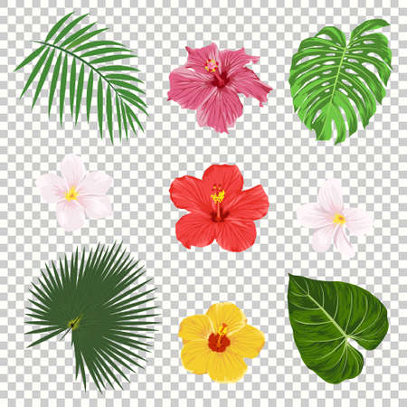 Vector tropical leaves and flowers icon set isolated on transparency grid background Illustration
