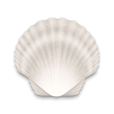 Vector 3d Realistic White Closed Scallop Pearl Seashell Icon Closeup Isolated on White Background. Design Template. Top View.