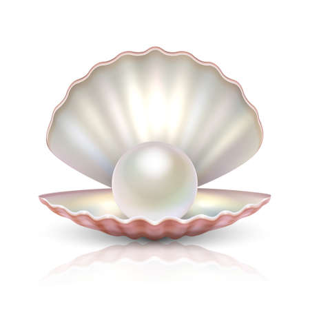 Vector 3d Realistic Beautiful Natural Opened Pearl Shell with Pearl Inside Icon Closeup Isolated on White Background with Reflection. Design Template of Seashell for Graphics. Front View