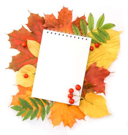 Notebook lying on autumn leaves Stockfoto