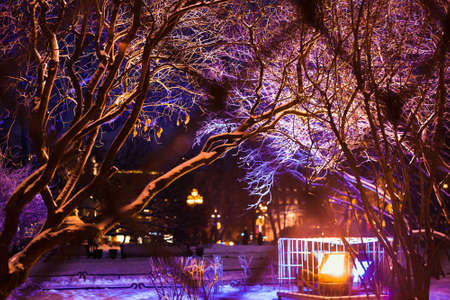 stock photo tree branches covered with bright christmas lights and snow winter city park christmas background holiday street illumination