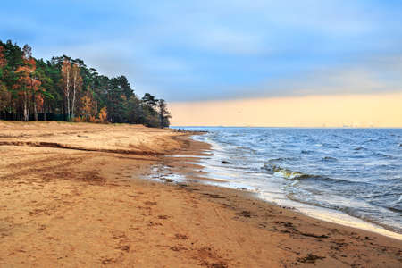 Coast of the Gulf of Finland. Baltic sea shore. Autumn sunset. Pine forest along the beach. Golden sand and cold blue water. Seascape.