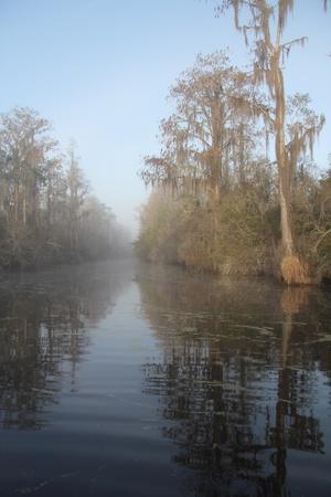 Mist on the Suwannee River - Okefenokee Swamp Wildlife Refuge, Georgia 版權商用圖片