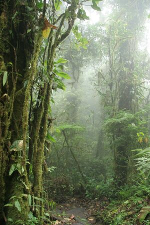 Monteverde Cloud Forest Nature Preserve  Shrouded in Mist - Costa Rica 스톡 콘텐츠