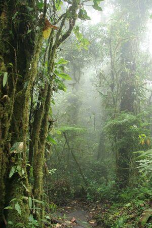 Monteverde Cloud Forest Nature Preserve  Shrouded in Mist - Costa Rica Stockfoto