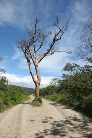 Tree Growing in the Middle of a Dirt Road - Costa Rica