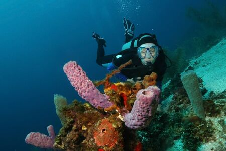 Scuba Diver and Purple Vase Sponges on a Coral Reef in Roatan