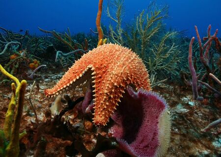 Sea Star and Sponge - Cozumel, Mexico 免版税图像