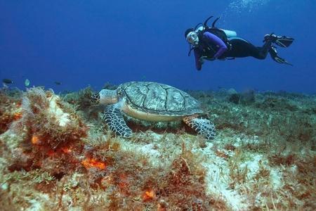 Hawksbill Turtle (Eretmochelys imbriocota) and Scuba Diver - Cozumel