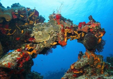 Coral Reef Forming an Arch - Cozumel, Mexico  스톡 콘텐츠