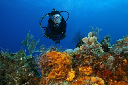 Woman Scuba Diving Over a Coral Reef - Cozumel Mexico 免版税图像