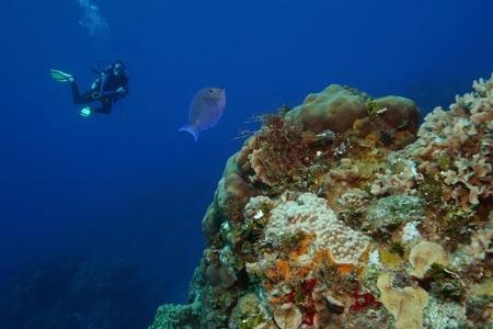 Scuba Diver and Blue Tang (Acanthurus coeruleus) - Cozumel, Mexico photo