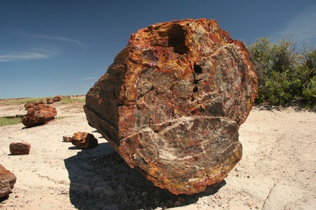 Fossilized Tree Trunk from the Triassic Period - Petrified Forest National Park, Arizona Stock Photo - 12182126
