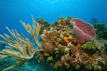 멕시코, 코 수멜에있는 산호와 스폰지의 다양한 다채로운 산호초 스톡 콘텐츠