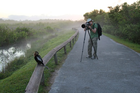 Wildlife Photographer Taking a Picture of an American Anhinga -