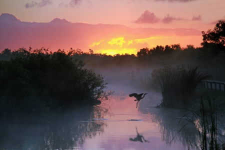 marshes: Everglades National Park at Sunrise with the Silhouette of a Flying Heron Stock Photo