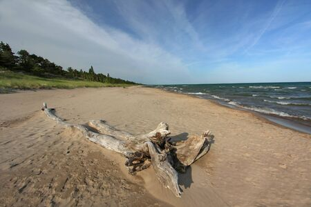 long lake: Driftwood on Long Expanse of Deserted Beach in Pinery Provincial Park - Lake Huron, Ontario, Canada