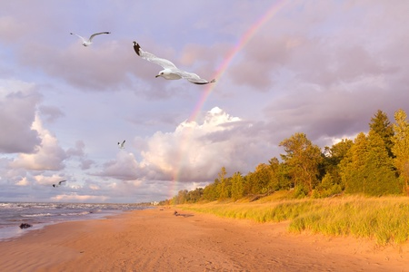 Rainbow Over a Beach with Ring-billed Gulls Flying By - Lake Huron, Ontario, Canada photo